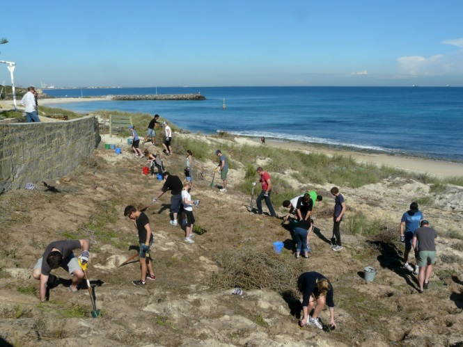 Cottesloe Dune System Restoration Works 2011